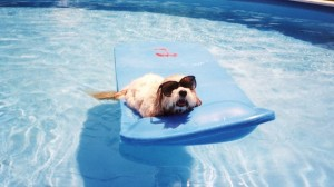 dog heat tips include going for a swim!