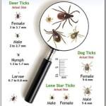 tick season in Maine